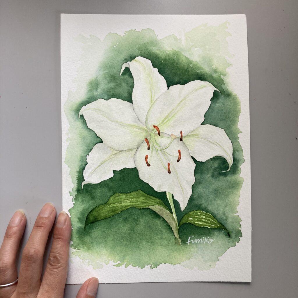 illustration white lilly